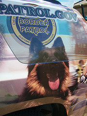 Border Dog